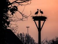 Neerijnen Ooievaarsnest bij zonsopkomst