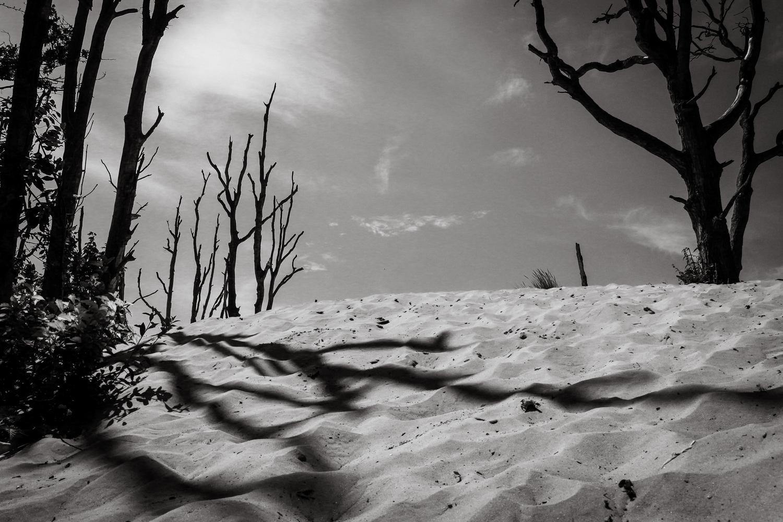 Duinen Zandvoort