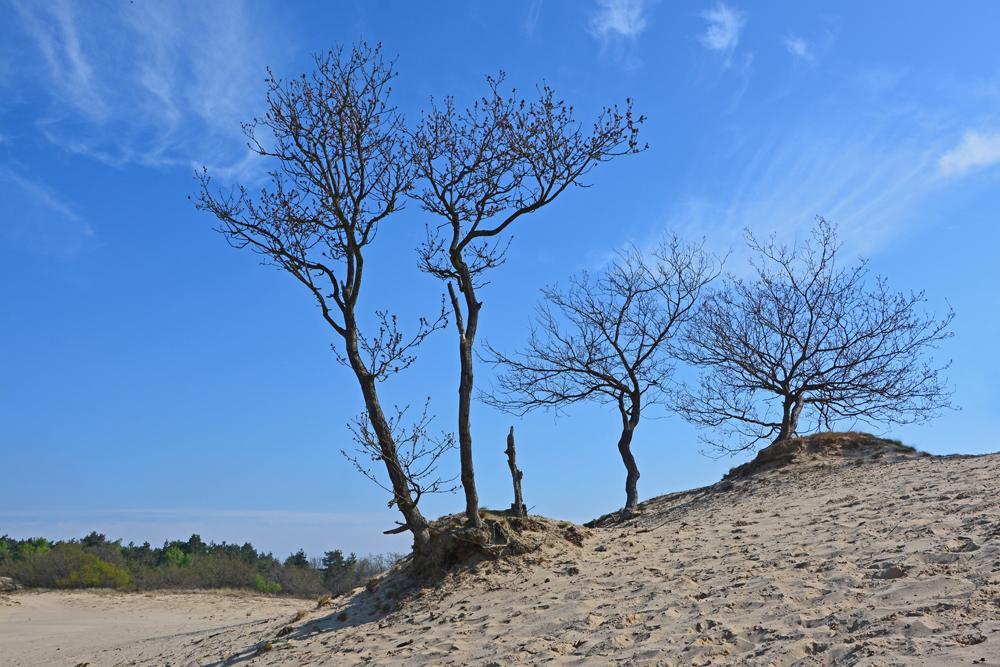 Loonse en Drunense duinen stuifduin
