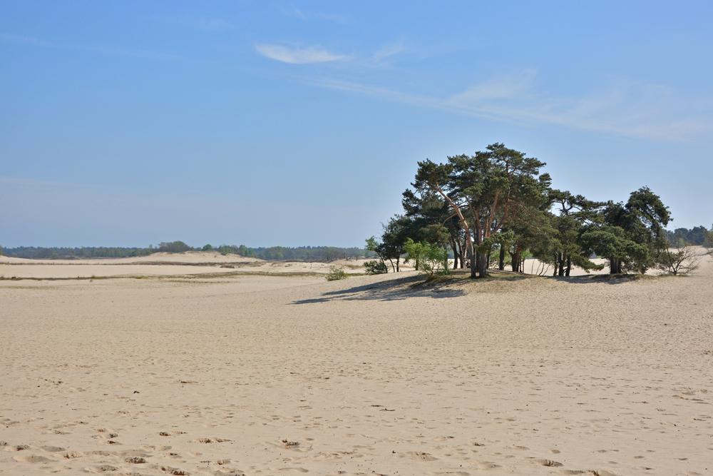 Loonse en Drunense duinen stuifzand