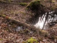 Verkleind-weerspiegeling-IMG_1351